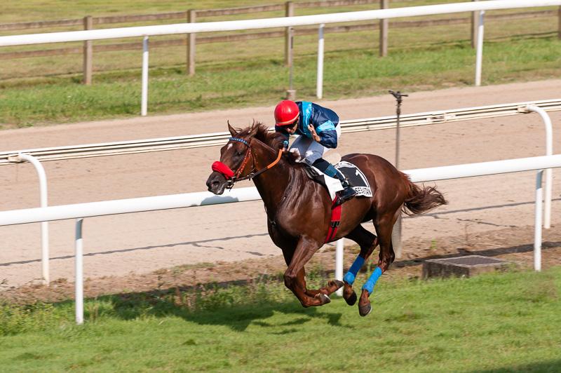 Seguro apuesta a caballo ganador astropay retiros - 12164