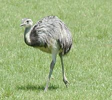 Anexo gran premi animales de australia aves para jugadores españoles - 6019